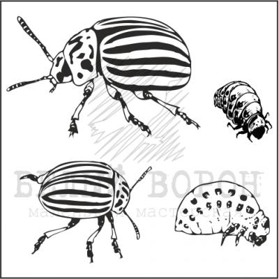 "набор ""Колорадские жуки 2"""